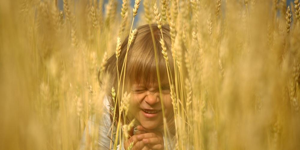Работа: Игры в пшеничном поле