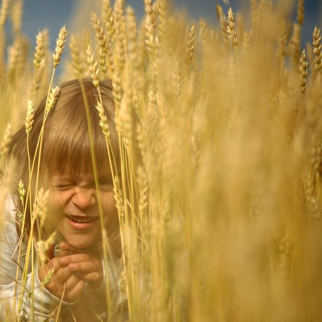 Работа : Игры в пшеничном поле