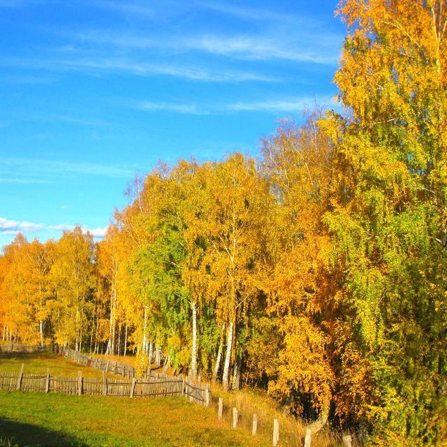 Работа: Золотая осень