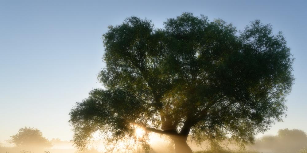Работа: Магическое дерево