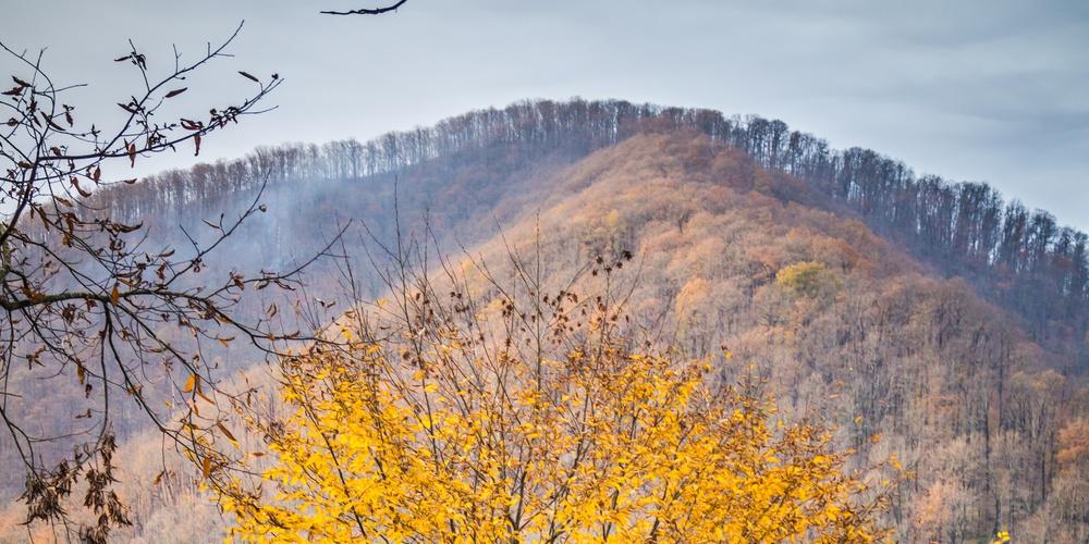 Работа: Осень в горах