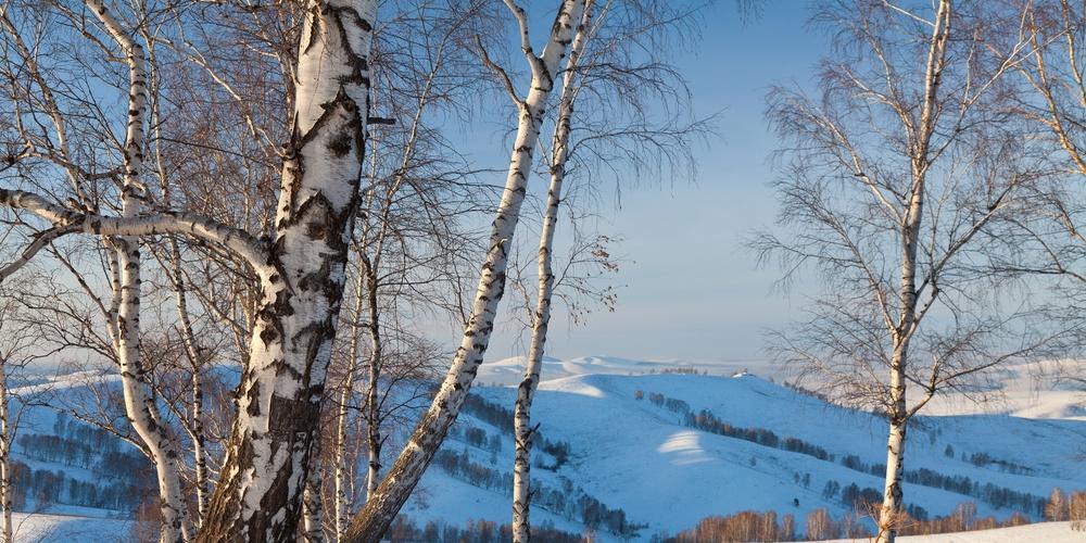 Работа: Зима в Синегорье