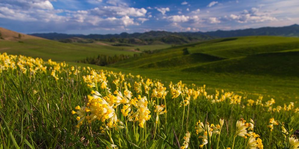 Работа: Весна в Синегорье
