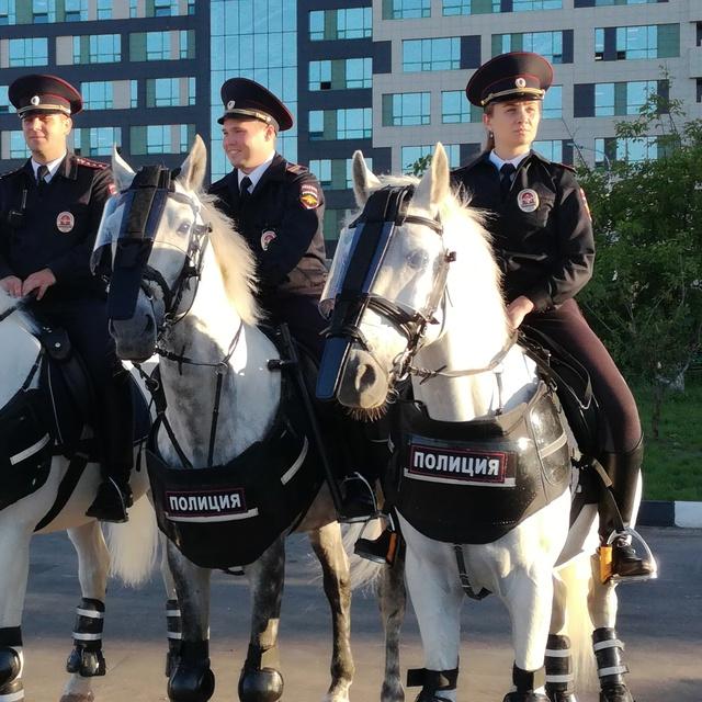 Работа : Моя российская полиция