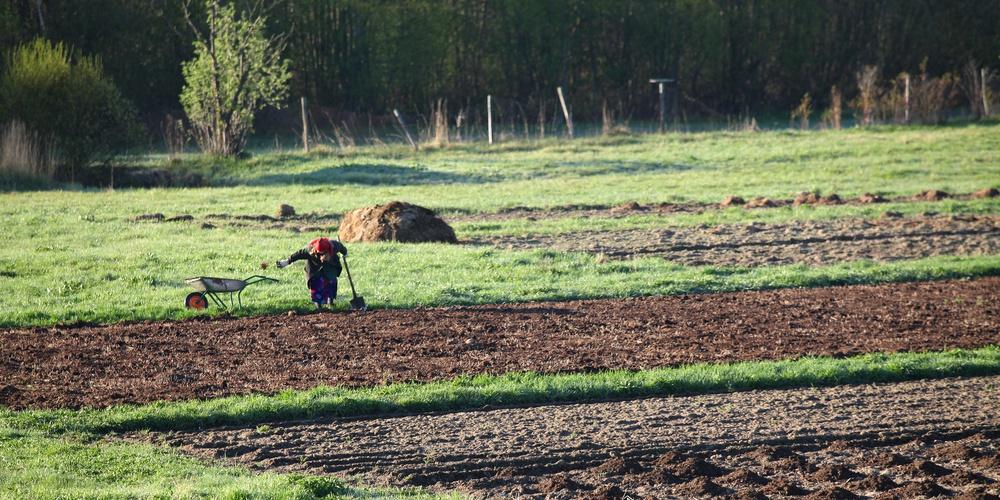 Работа: Деревенское поле