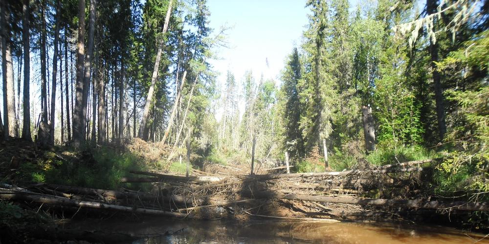 Работа: Таежница река Ендырь, Ханты-Мансийский автономный округ-Югра