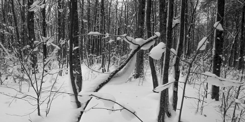 Работа: Снежки.