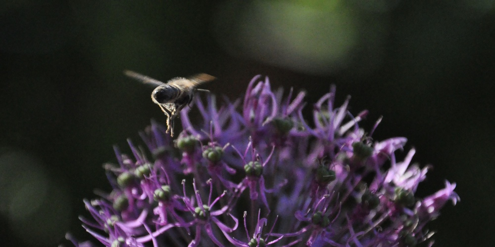 Работа: Подмосковная пчела