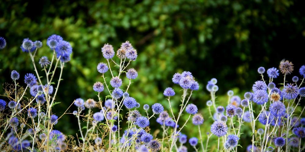 Работа: Полевые цветы