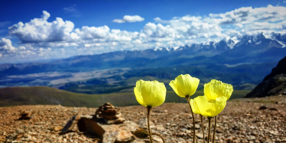 Работа: Выше гор могут быть только цветы