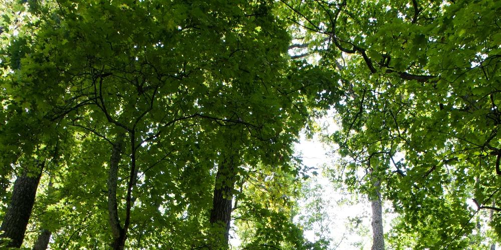 Работа: Шипов лес
