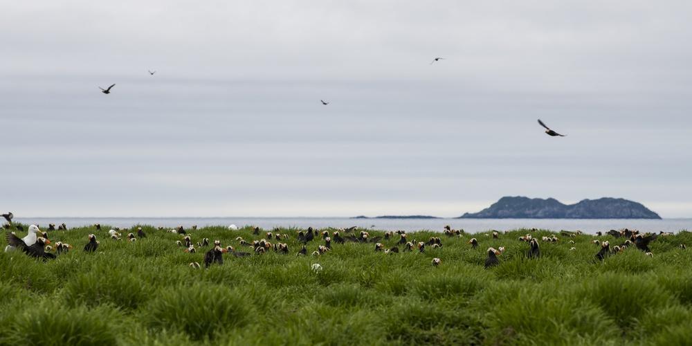 Работа: Топорки на острове Топорков