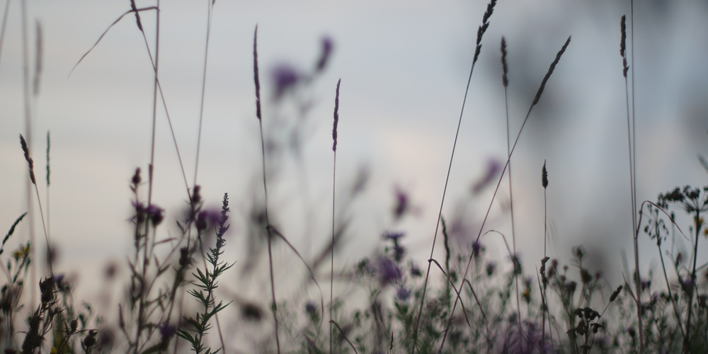 Работа: Закат в поле