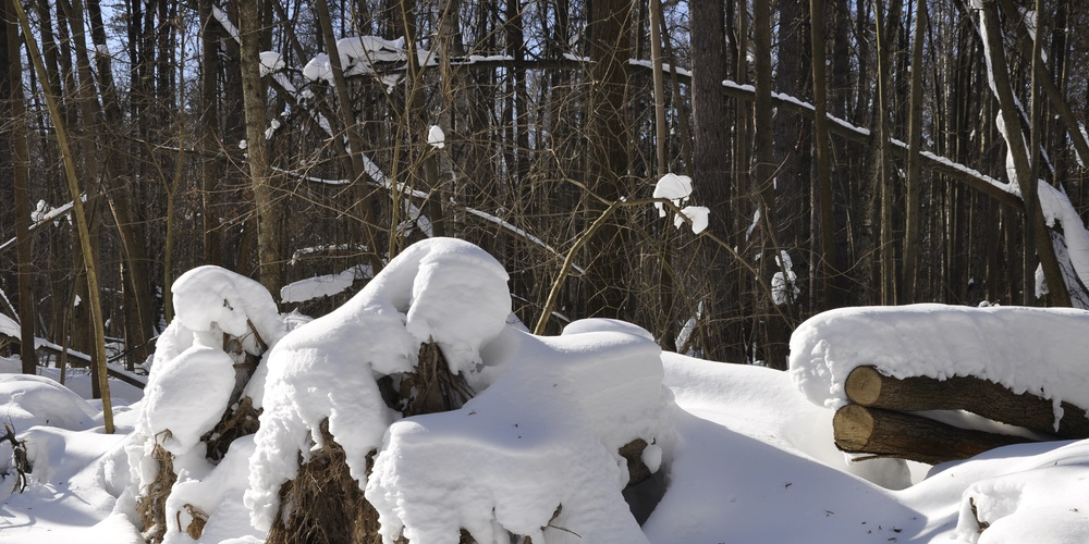 Работа: Уходящая Зима.