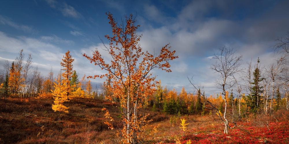 Работа: Осень