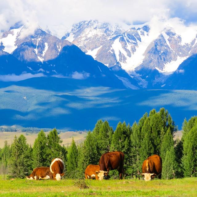 Работа : Алтайские Альпы