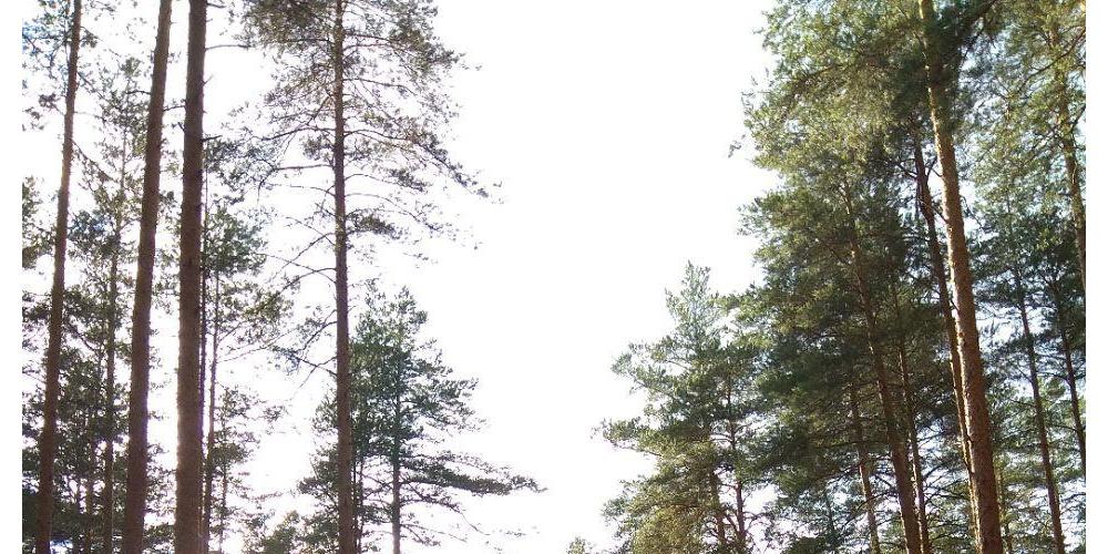 Работа: Леса России