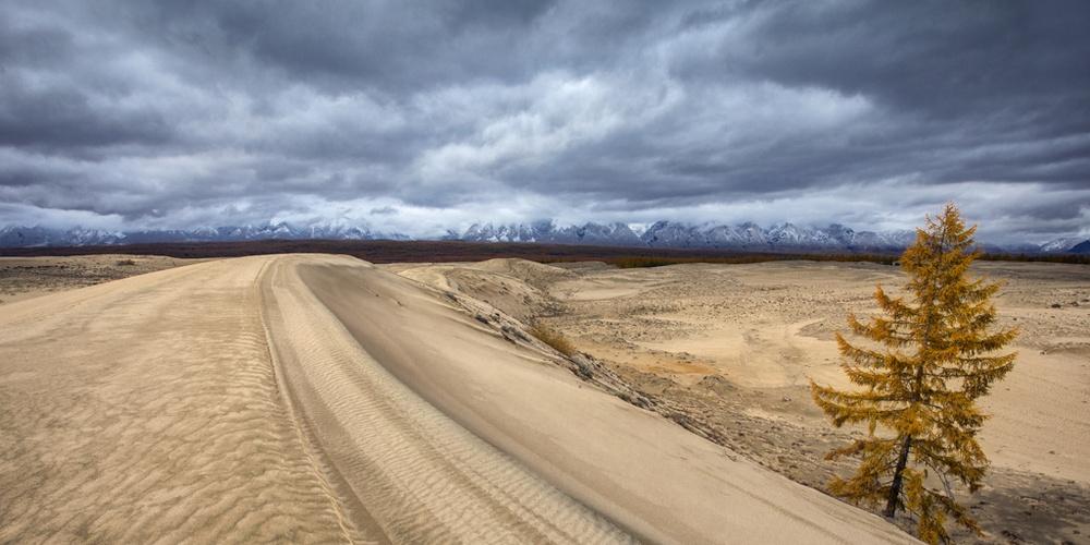 Работа: В Чарских песках