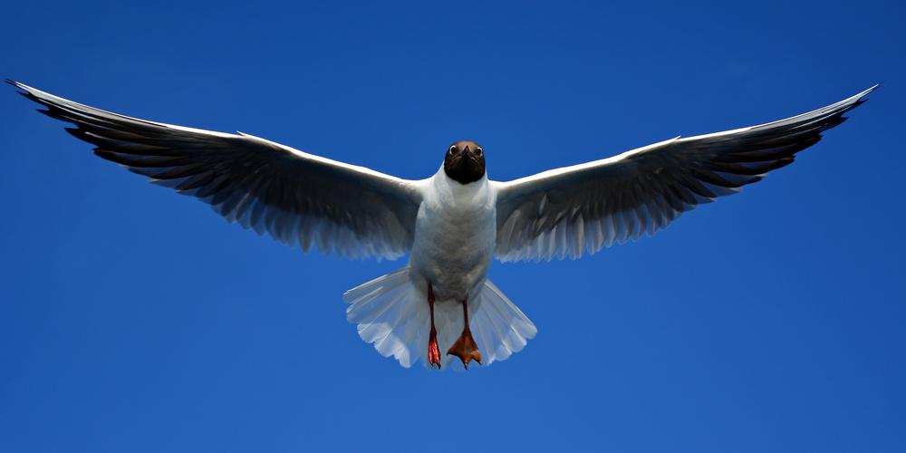 Работа: Размах крыльев