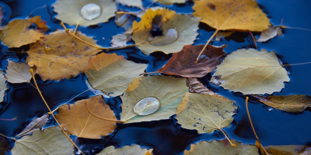 Работа: Осенние листья