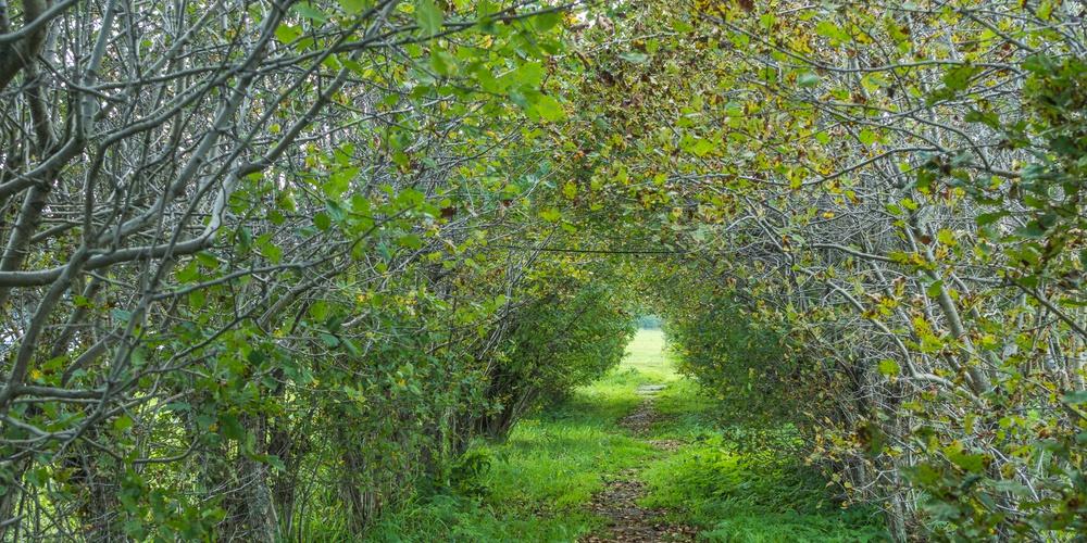 Работа: Путь в осень